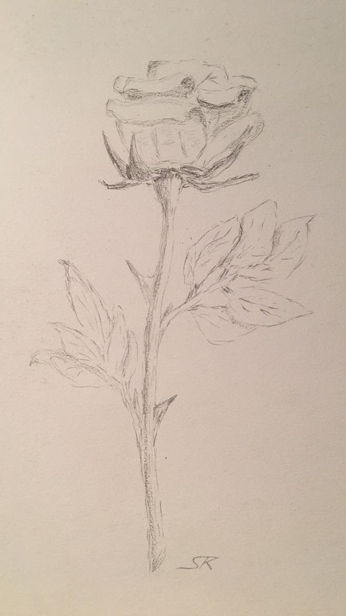 Bleistiftzeichnung einer Rose